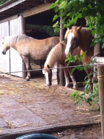 Ponycamp013