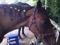Ponycamp007